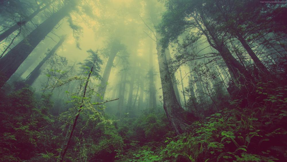 forest-2560x1440-green-fog-threes-8160.jpg